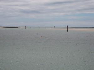 Port Sorrell  *On leads, seaward
